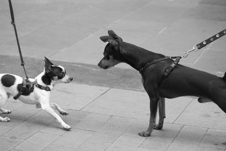 Hond vergadering