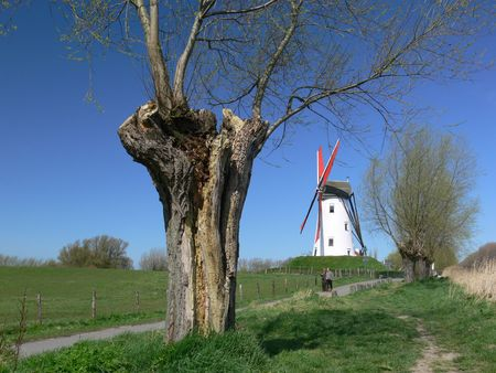 willow trees and wind mill, Damme, Belgium