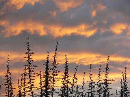 kruiden met mooie avond wolken  Stockfoto