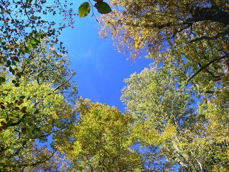 herfst bomen in de Belgische Ardennen