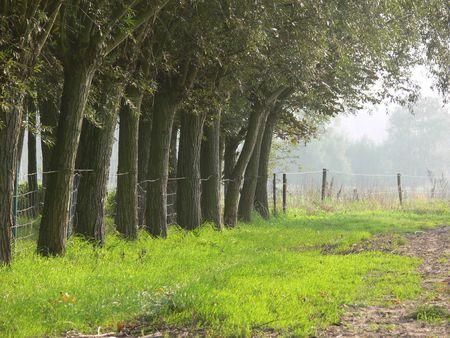 Tree rij en helder geel-groen gras Stockfoto