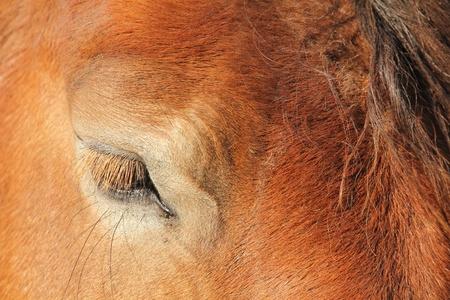 horse eye Stockfoto - 11094730