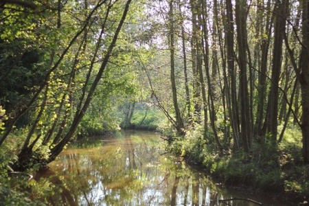 River Grote Neet in Kempen region, Belgium