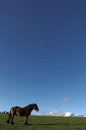 Paard met blauwe hemel Stockfoto - 11094712