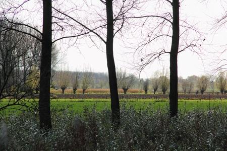 polder: polder scenery