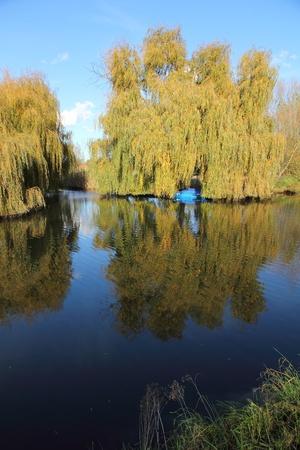 Treurwilgen langs de Moervaart kanaal Stockfoto - 11307325