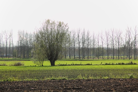 polder landschap, Wachtebeke, België