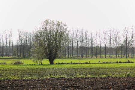 polder landschap, Wachtebeke, België Stockfoto - 11307323