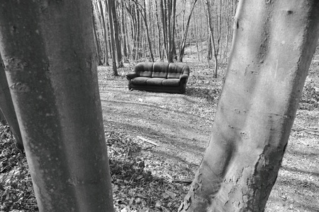 astray couch in forest