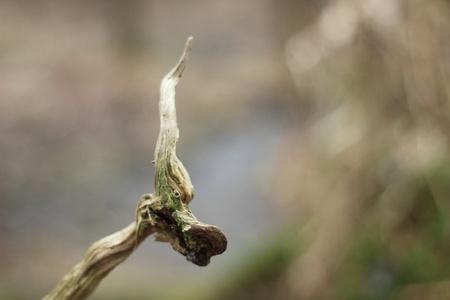 dode boom tak, zoals vlam Stockfoto