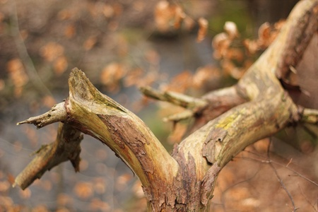 curved dead tree branch