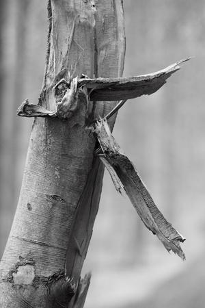 remains of broken tree branch Stockfoto