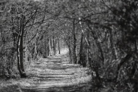 Eindeloos op zoek overwoekerd pad in Drongen, België Stockfoto - 13084000
