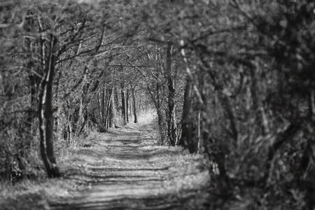 endless looking overgrown path in Drongen, Belgium