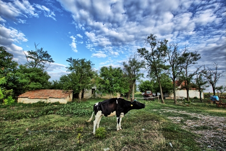 cow in front of old farm in Serbia Stockfoto