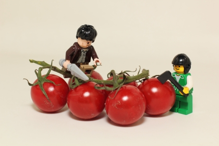 cherry tomatoes under attack by puppets