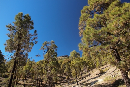 Tenerife Stockfoto - 14977166