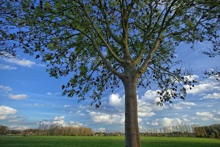 Tree along a dike, Merelbeke, Belgium