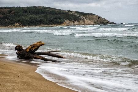 Old Drift wood lie on a white sandy beach