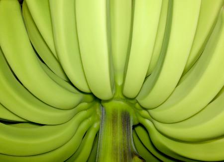 unblemished: unripe bananas with unblemished skin