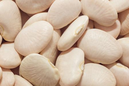 lima bean: Lima beans macro