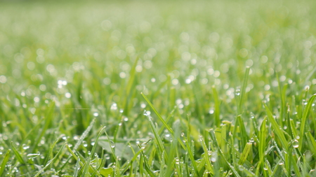 An image of dew on green grass
