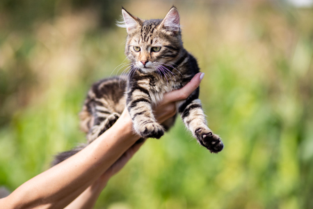 An image of cat on hands Stockfoto