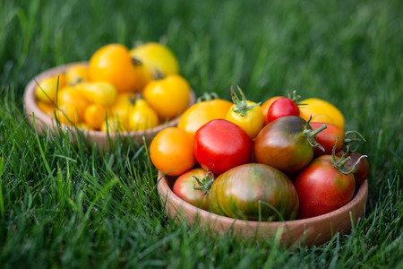 An images of red and yellow tomatoes on a wooden plate