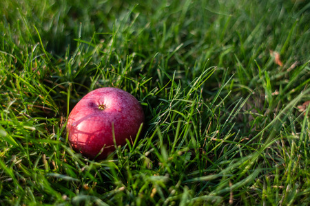 An images of red apple on the grass Stockfoto