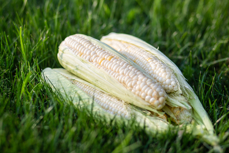 An image of fresh corn