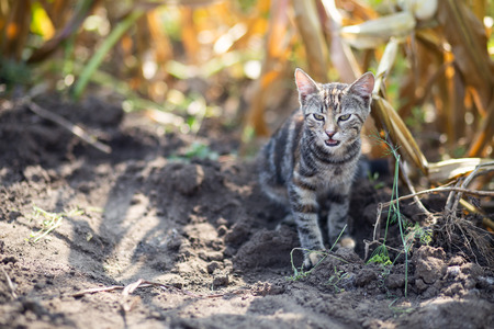 An image of cat walking alone Stockfoto