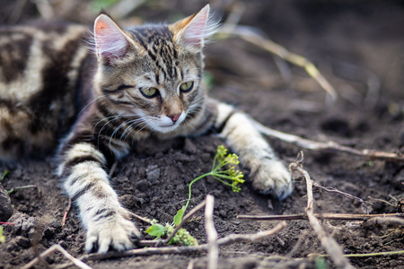 An image of domestic cat resting outdoor