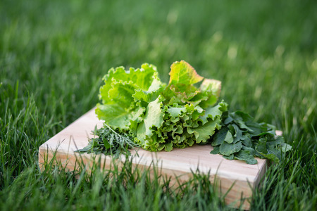 An image of lettuce and arugula leaves