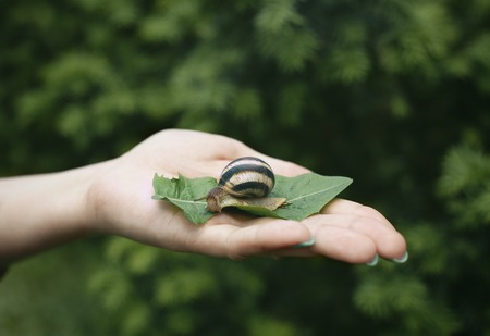 secreted: Snail on the palm of a woman.