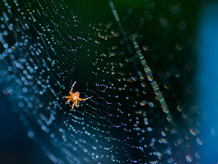 pretty scary frightening spider web for halloween at web with dew on blue background