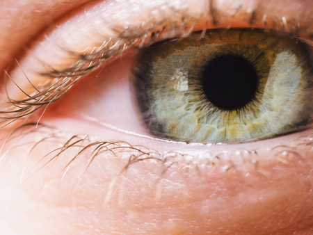 Extreme close up of womans grenn eye iris. Human eye iris contracting. Stock Photo