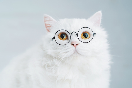Domestic soigne scientist cat poses on white background wall. Close portrait of fluffy kitten in transparent round glasses. Education, science, knowledge concept Banco de Imagens
