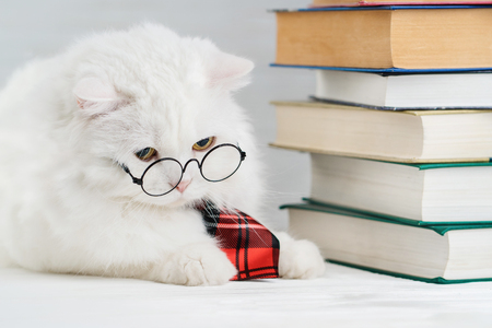 Portrait of furry cat in transparent round glasses. Domestic soigne scientist kitty in red tie poses on books background in library. Education, science, knowledge concept. Studio photo. Stockfoto