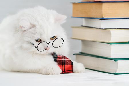 Retrato de gato peludo en vasos redondos transparentes. Gatito científico de soigne doméstico en corbata roja plantea sobre fondo de libros en la biblioteca. Educación, ciencia, concepto de conocimiento. Foto de estudio.