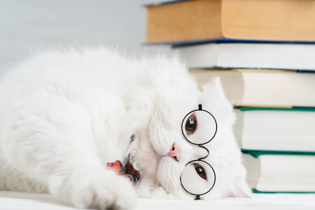 Portrait of furry cat in transparent round glasses. Domestic soigne scientist kitty in red tie poses on books background in library. Education, science, knowledge concept. Studio photo. Banco de Imagens - 113058776