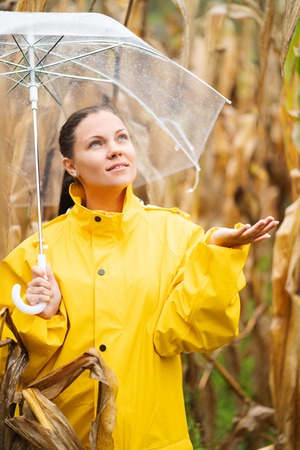 Pretty caucasian young girl in yellow raincoat standing in corn field with transparent umbrella. Woman checks if it is raining. Autumn day concept.
