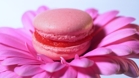 Pink macaroon - delicious and beautiful french dessert on gerbera flower on blue background. Cooking, food, baking, nature concept.