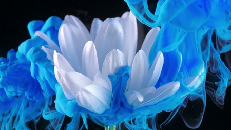 White flower underwater with blue Ink reacting and creating abstract cloud formations