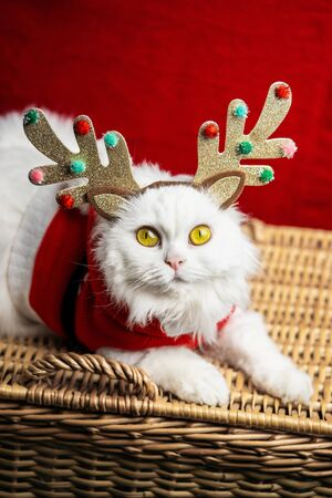 Portrait of a fluffy white cat in a Christmas decoration - deer horns and Santa Claus costume. New year, pets, animals meme concept. Zdjęcie Seryjne