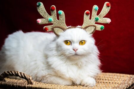 Portrait of a fluffy white cat in a Christmas decoration - deer horns and Santa Claus costume. New year, pets, animals meme concept