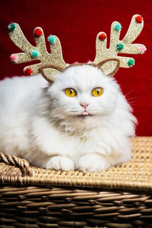 Portrait of cat in a Christmas decoration - deer horns and Santa Claus costume