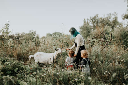 First meeting of toddler babies twins boys and white goat in nature. Summer field landscape with farm domestic animal. Nature and kids