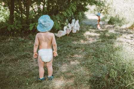 Children accompany the ducks to the river. Kids graze a poultry on village at summer.