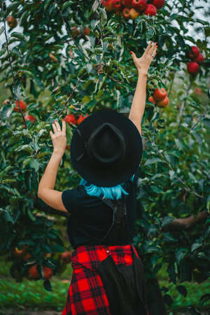 Blue haired woman picking up ripe red apple fruits from tree in green garden. Organic lifestyle, agriculture, gardener occupation
