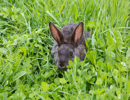 Rabbit that is sticking in the higher grass Stock Photo